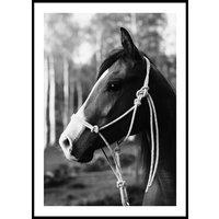 HORSE PORTRAIT - Poster 50x70 cm