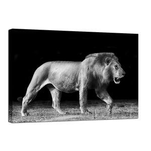 Canvastavla Walking Lion - 100x75 cm