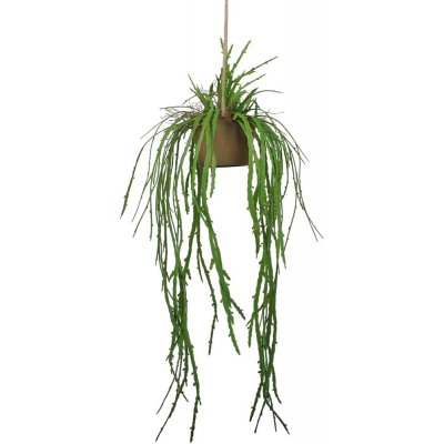 Ovidia hängplanta