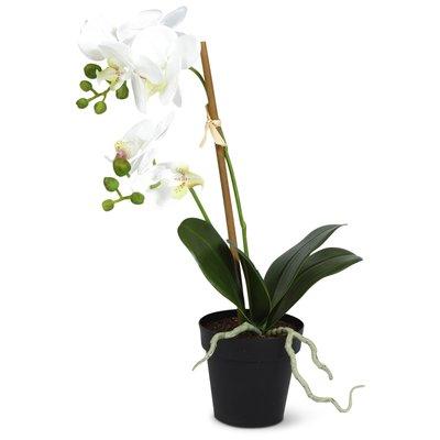 Konstväxt - Orkidè H60 cm