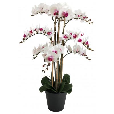 Konstväxt - Orkidé 9 stänglad H90 cm - Vit/Rosa