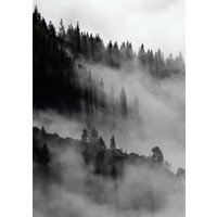 Poster Skog