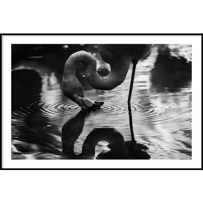 FLAMINGO REFLECTION - Poster 50x70 cm