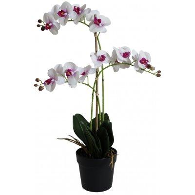 Konstväxt - Orkidé 3 stänglad H64 cm - Vit/Rosa