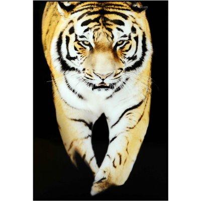 Glastavla Tiger - Svart ram