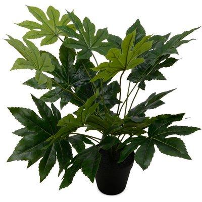 Konstväxt - Papaya 50 cm